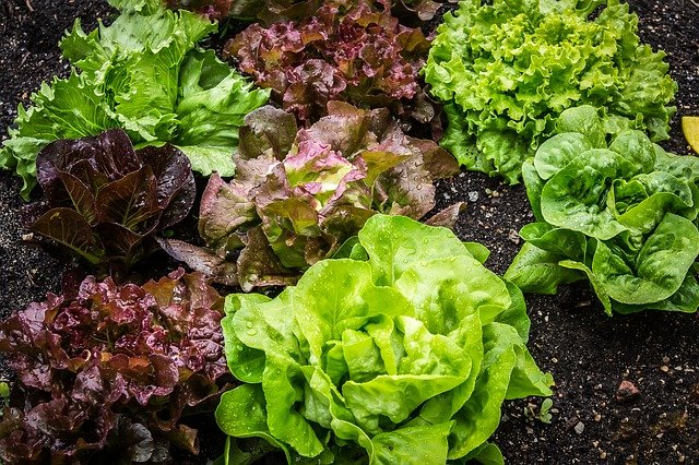 Early Spring Crops to Plant