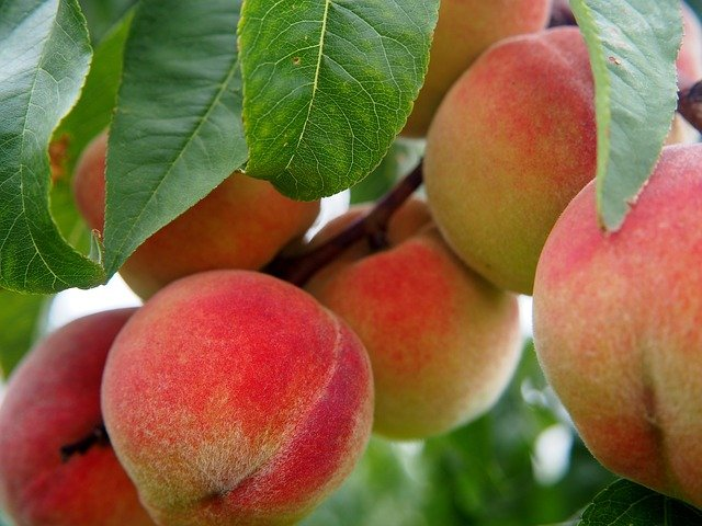 How to Care for a Peach Tree